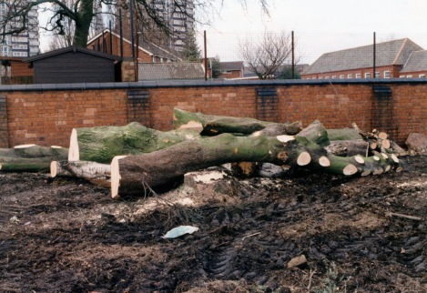 "All that was left of the trees used to ""welcome"" new boys to the school."